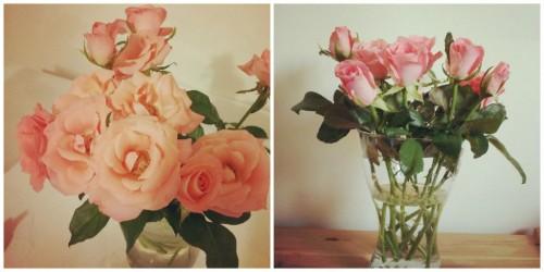 קני פרחים לשבת